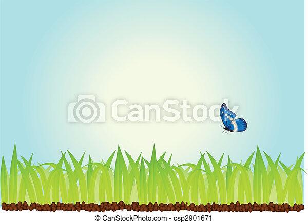 πεταλούδα , γρασίδι  - csp2901671