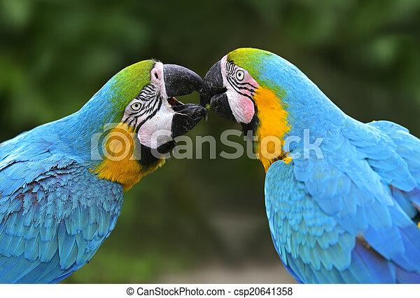 πουλί , παπαγάλος  - csp20641358
