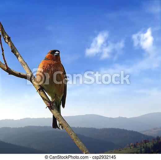 πουλί , παράρτημα  - csp2932145