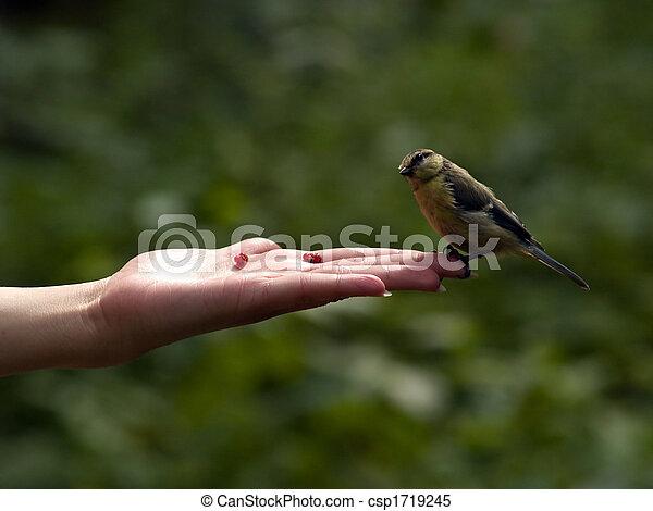 πραγματικό πουλί φωτογραφίες μεγάλα βυζιά μουνιά
