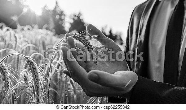 σιτάρι , εικόνα , κράτημα , μονόχρωμος , επιχειρηματίας , αυτί  - csp62255342
