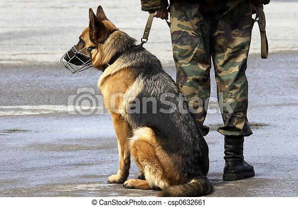 σκύλοs , εργαζόμενος  - csp0632661