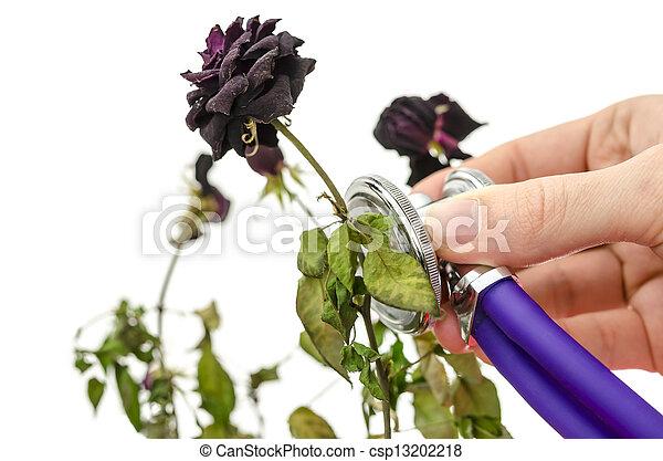 στεγνός , τριαντάφυλλο , ιατρικός , στηθοσκόπιο , σώζω  - csp13202218