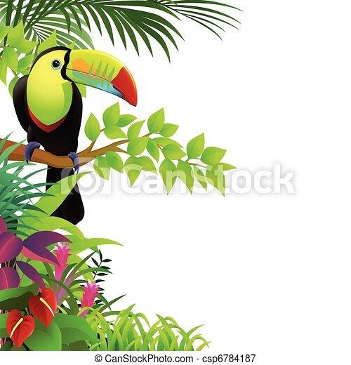 τροπικός , οπωροφάγο πτηνό με μέγα ράμφο , δάσοs , πουλί  - csp6784187