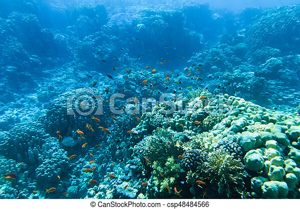 υποβρύχιος , γαλήνιος  - csp48484566