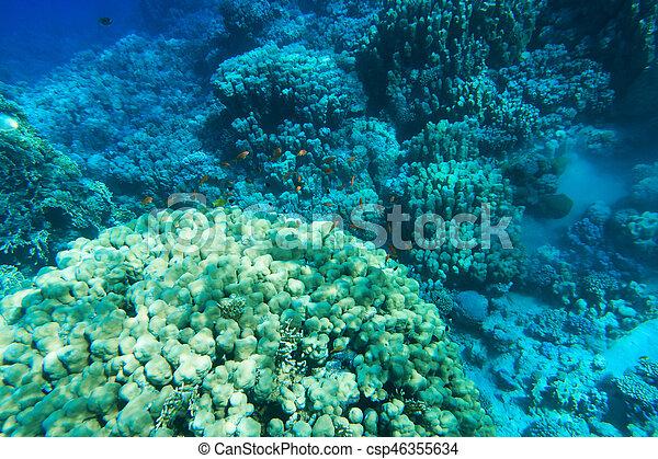 υποβρύχιος , γαλήνιος  - csp46355634