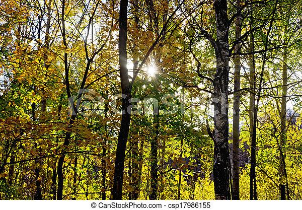 φθινόπωρο , ήλιοs , δάσοs  - csp17986155