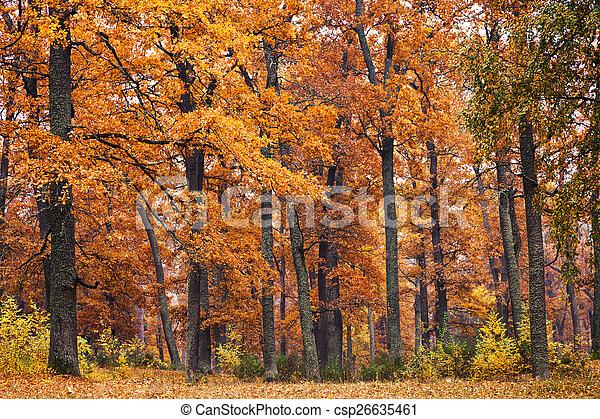 φθινόπωρο αναδασώνω  - csp26635461