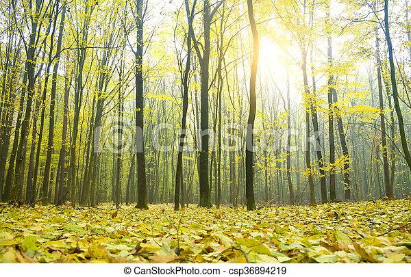 φθινόπωρο αναδασώνω  - csp36894219