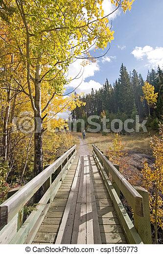 φθινόπωρο , μπογιά , πέφτω  - csp1559773