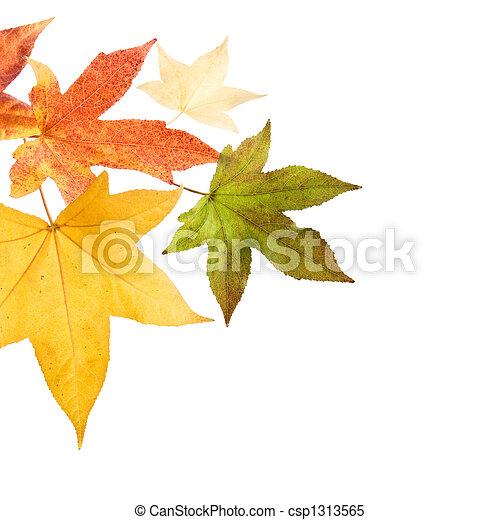 φθινόπωρο φύλλο , πέφτω  - csp1313565