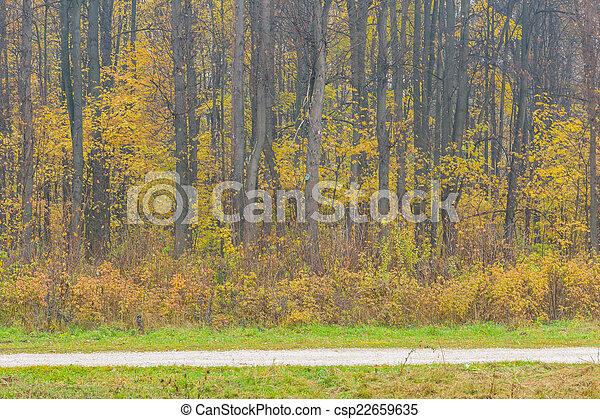 φθινόπωρο , forest. - csp22659635