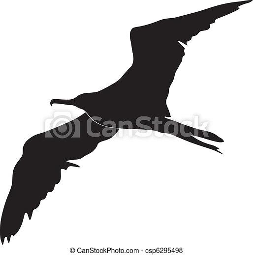 φρεγάτα πουλί  - csp6295498