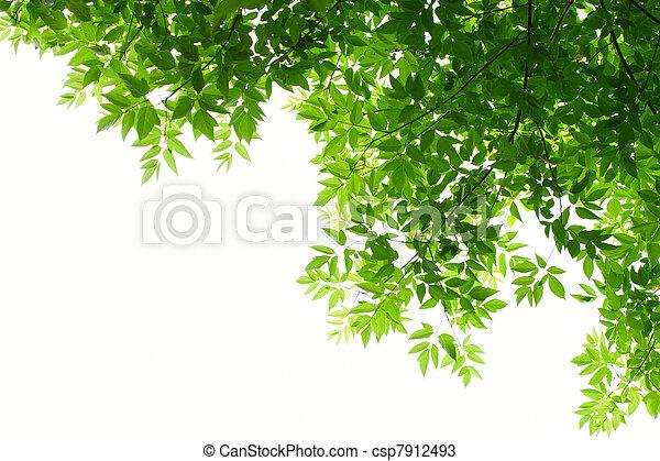 φύλλα , αγίνωτος αγαθός , φόντο  - csp7912493