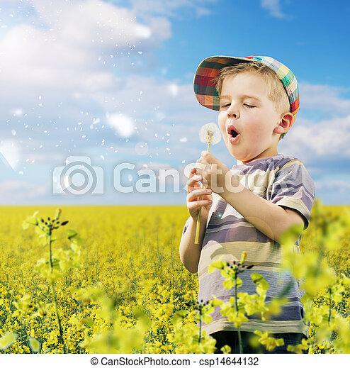 χαριτωμένος , αγριοραδίκι , παίξιμο , λιβάδι , αγόρι  - csp14644132
