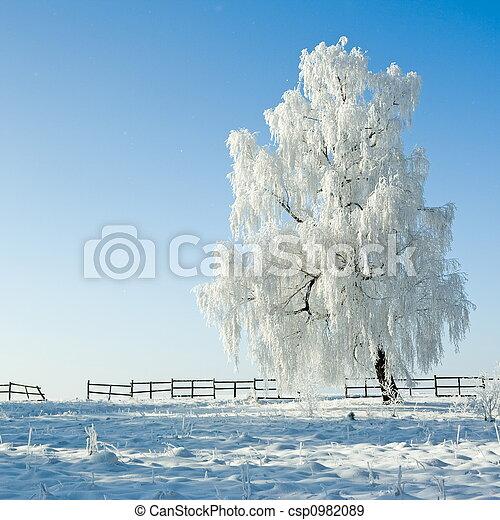 χειμερινός γραφική εξοχική έκταση  - csp0982089