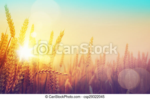 χρυσαφένιος , τέχνη , ηλιόλουστος , πεδίο , σιτάρι , ημέρα  - csp29322045