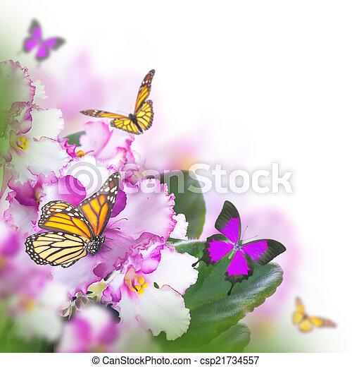 бабочка, букет, удивительно, весна, violets - csp21734557