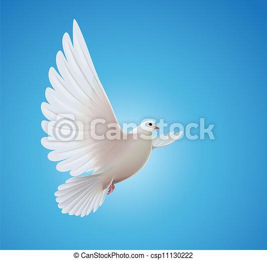 белый, голубь - csp11130222