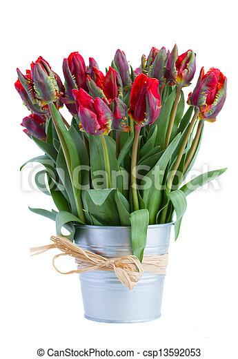 весна, горшок, цветы, тюльпан - csp13592053