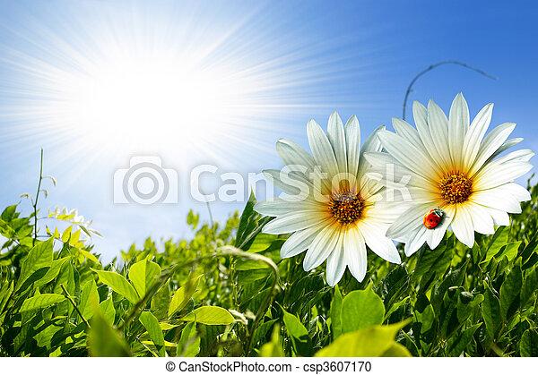 весна, листва - csp3607170