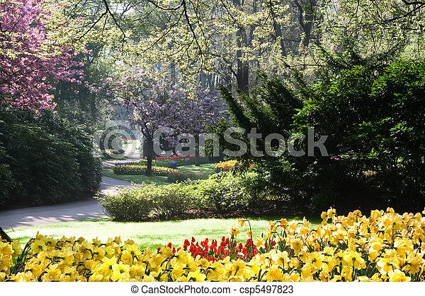 весна, парк, blooming - csp5497823