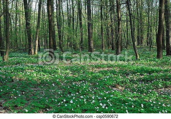 весна - csp0590672