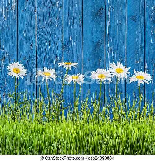 весна, трава - csp24090884
