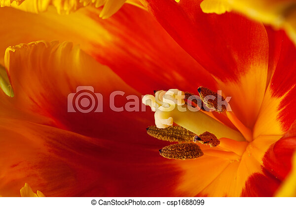 весна, тюльпан - csp1688099