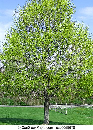 весна, has, захмелевший - csp0058670