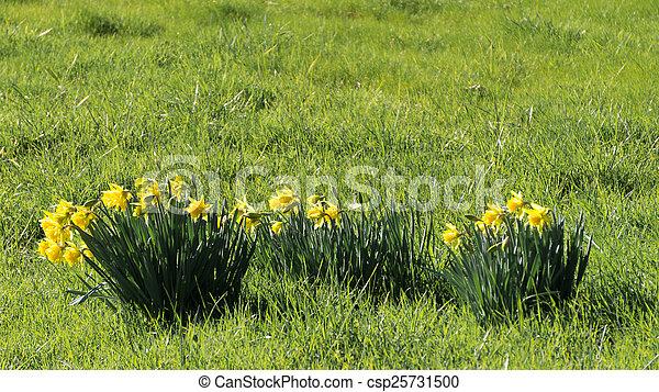 весна, has, захмелевший - csp25731500