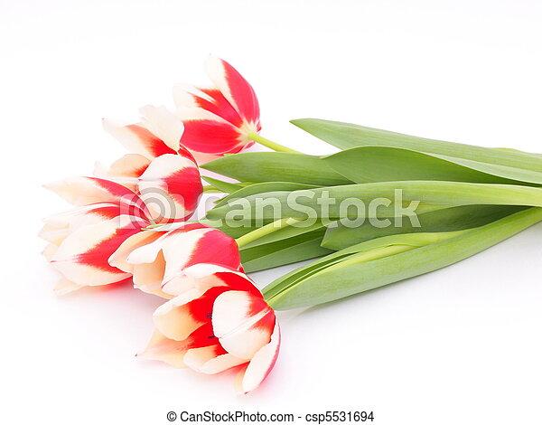 весна, tulips - csp5531694