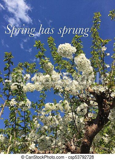 концептуальный, весна, has, image., sprung. - csp53792728