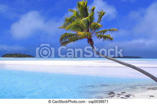 пальма, рай - csp0038971