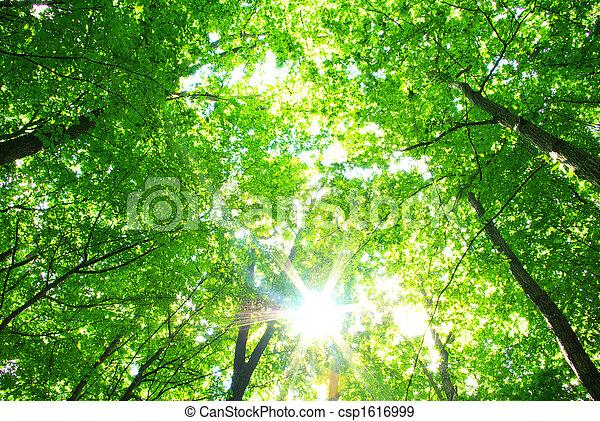 природа - csp1616999