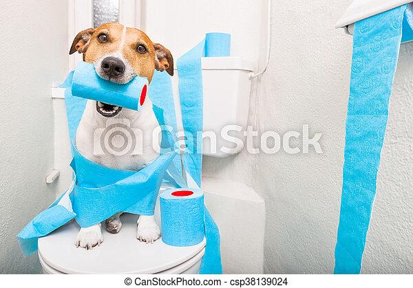 собака, сиденье, туалет - csp38139024