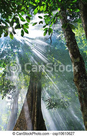 солнечный лучик, природа - csp10610627