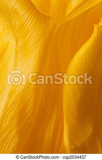 тюльпан, желтый, petals - csp2034437