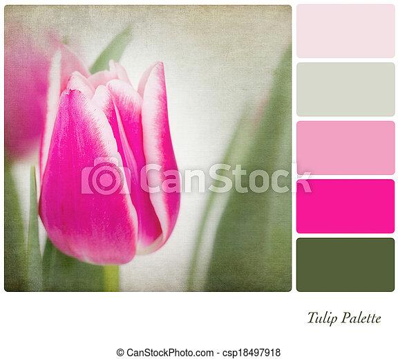 тюльпан, палитра, цвет - csp18497918
