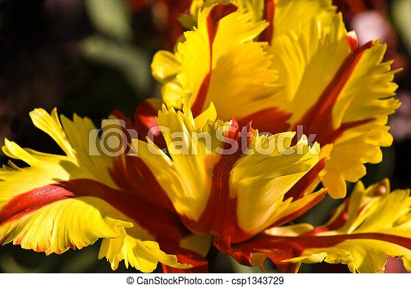 тюльпан, попугай - csp1343729