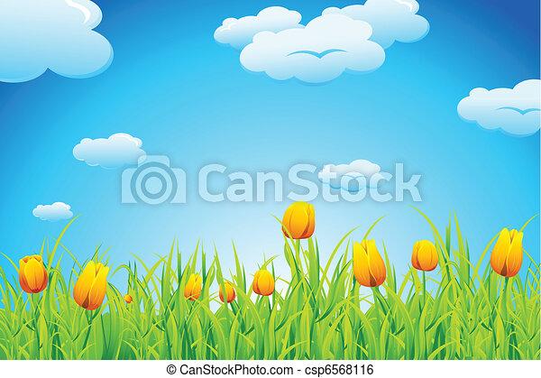 тюльпан, сад - csp6568116