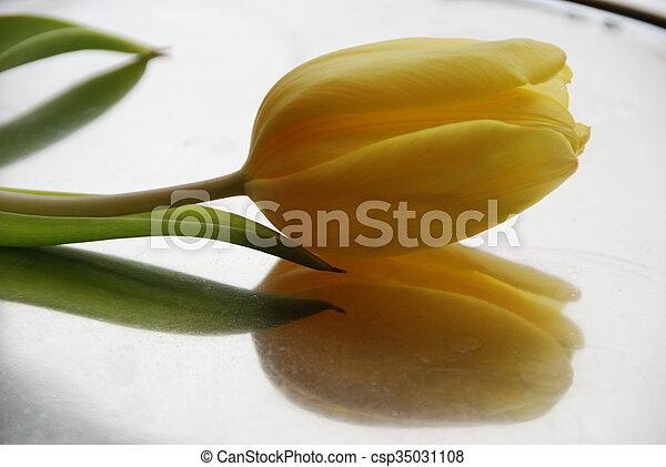 тюльпан, яркий, желтый - csp35031108