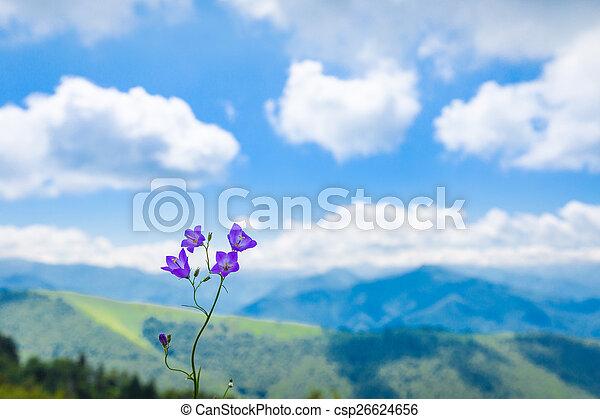 цветок, пурпурный, против, пиренеи, колокольчик, фон - csp26624656