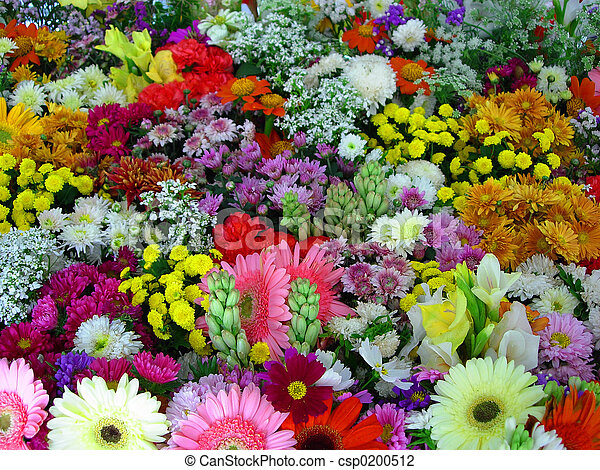 цветы, выставка - csp0200512