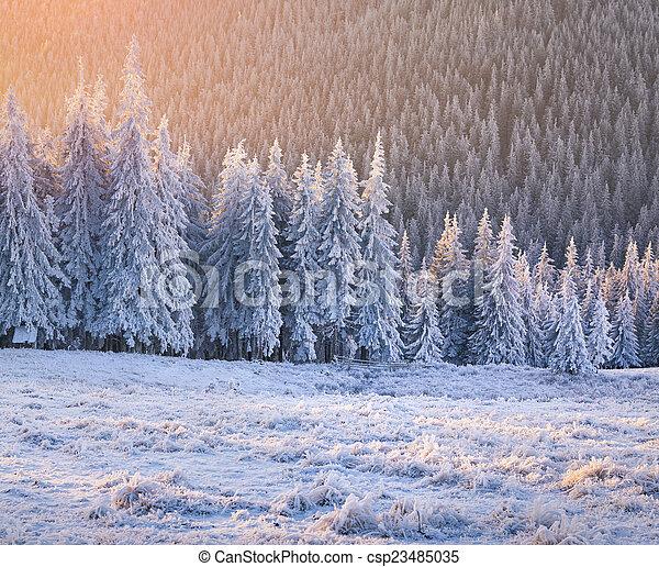 הר, עלית שמש, חורף, forest., יפה - csp23485035