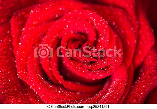ורדים, מעל, יום של ולנטיינים, אדום - csp25241291