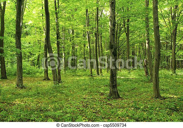 יער - csp5509734