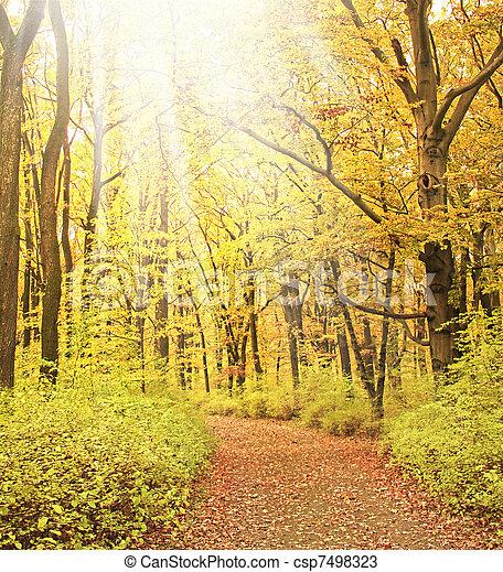 מעורפל, יער, דרך - csp7498323