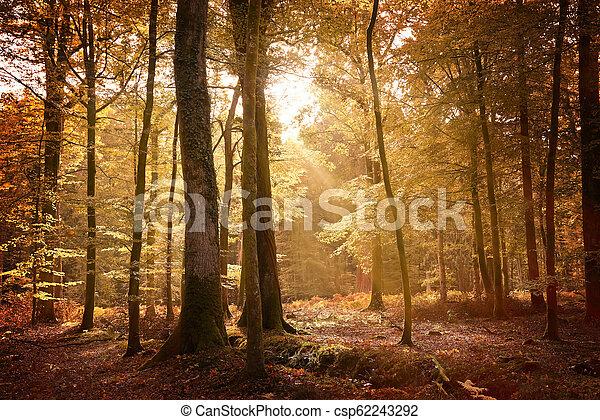 סתו, יער חדש, נוף - csp62243292