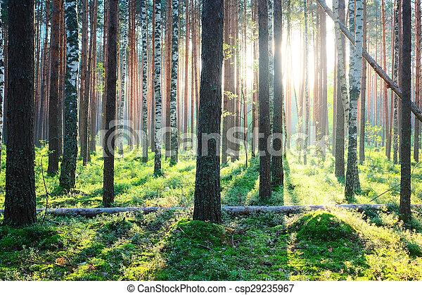 עלית שמש, יער, דאב - csp29235967